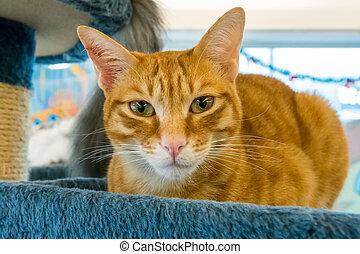 Furry pet cat
