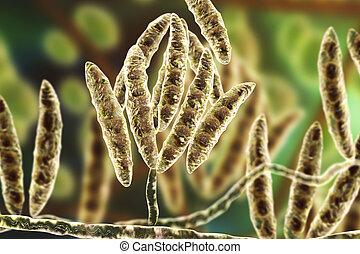 fusarium, erzeugen, mycotoxins, pilze
