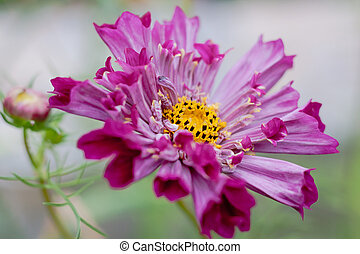 Flowers Cosmo Flowers Cosmos Against The Blue Sky Cosmos