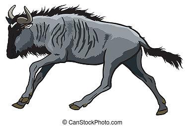 futás, blue wildebeest
