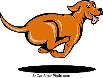 futás, kutya, megnézett, lejtő