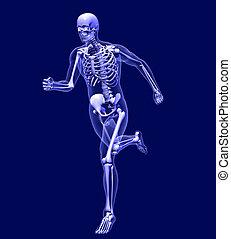 futás, röntgen, ember