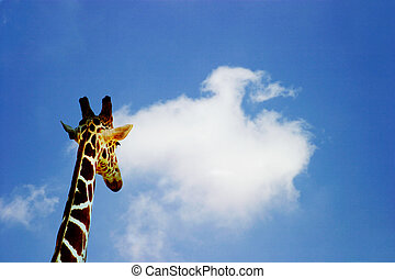 Future Prospects - Concept shot of a giraffe looking out to...