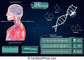 futuriste, coeur, corps, adn, cerveau, monde médical, humain, interface., balayage, hud