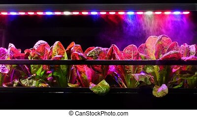 Futuristic automation of watering plants in green house. Modern farming technology.