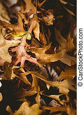 Fuul frame shot of leaves
