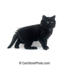 Fuzzy black kitten