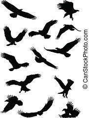fying, silhueta águia, pássaro