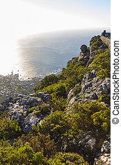 Fynbos vegetation at the top of Table Mountain 1 - Fynbos...