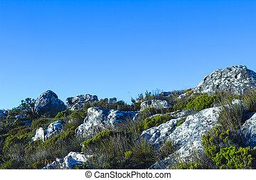 Fynbos vegetation at the top of Table Mountain 2 - Fynbos...