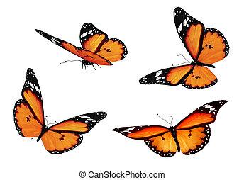fyra, apelsin, fjärilar