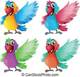 fyra, förtjusande, papegojor
