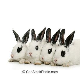 fyra, söt, kaniner