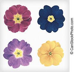 fyra, vild primula, blomningen, isolerat, retro, årgång, stil
