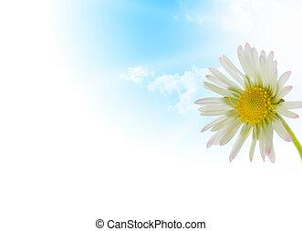gänseblumen, blume, floral entwurf, springen jahreszeit