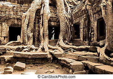 géant, arbre, couverture, cette, prom, temple