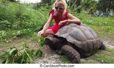 géant, la, tortue, digue