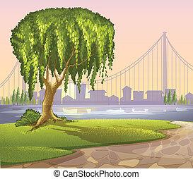 géant, vieil arbre, bâtiments, élevé, travers