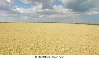 générer, blé, énergie, moderne, turbines, enquête, vert, aérien, vent, field.