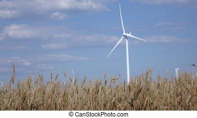 générer, blé, moderne, turbines, jeune, contre, énergie, arrière-plan vert, mûrir, vent