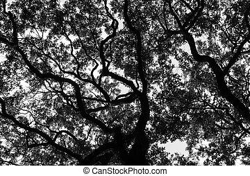 géorgie, savane, chêne, arbres, vivant, carrée