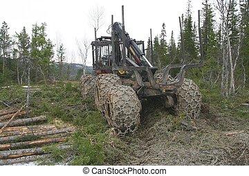 gép, erdő