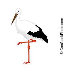 gólya, white háttér