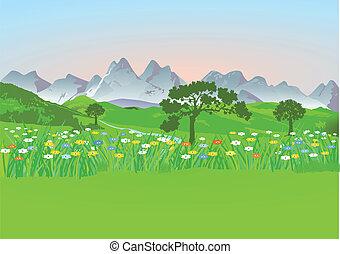 góra, łąka, góry