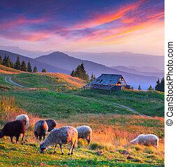 góra, barwny, jesień, zachód słońca, village., krajobraz