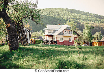 góra, carpathian, domy, wieś, dolina, bydło, prospekt