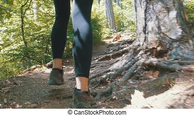 góra, kobieta hiking, feet, ciągnąć, las, podróżnik, ścieżka, prospekt