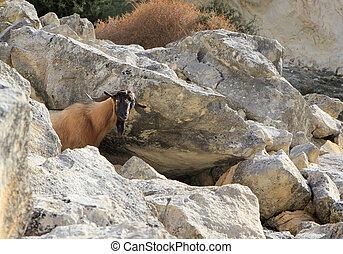 góra koza