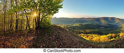 góra, panoramiczny, -, prospekt, las