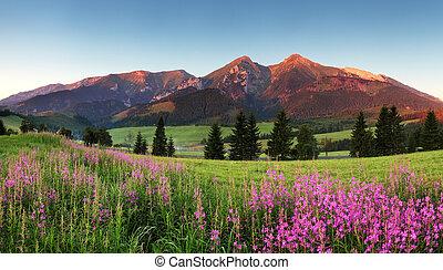 góra, piękno, panorama, -, slovakia, kwiaty