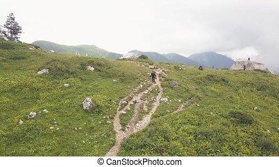 góra, pieszy, kobieta hiking, znowu, ciągnąć, objazd, truteń, prospekt