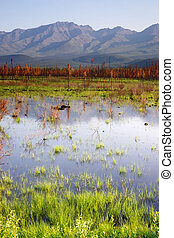 góra, sceniczny, alaska, woda, panoramiczny, outback, bagno, krajobraz