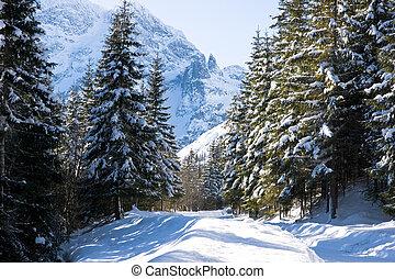 góra, tatras, las, w, zima, krajobraz