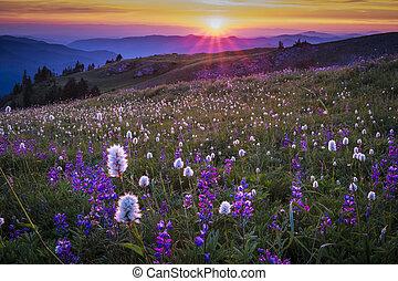 góra, wildflowers, zachód słońca, backlit