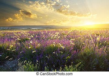 góra, zachód słońca, łąka, lato