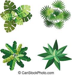 górny, ilustracja, wektor, drzewa, tło, biały, krajobraz, prospekt