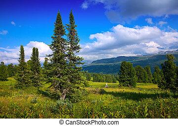 góry, las, krajobraz