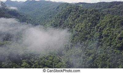 góry, strzał, dżungla, drzewa