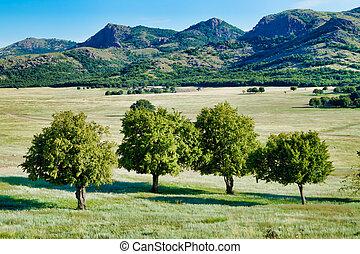 góry, wizerunek, drzewa, równiny, odległość