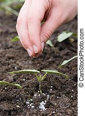 gödsling, grovkornigt, ung, gödslar, planta