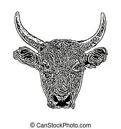 głowa, byk