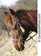 głowa, koń