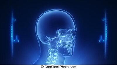 głowa, ludzki, rentgenowski, skandować