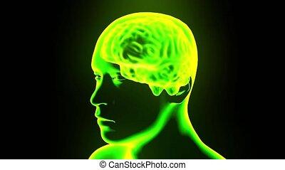 głowa, obracający, mózg, 4k, hologram, pętla