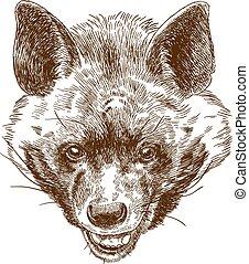głowa, rytownictwo, hiena, ilustracja