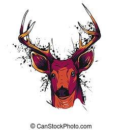 głowa, wektor, jeleń, barwny, ilustracja